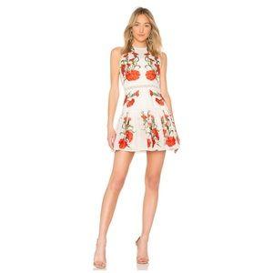 NEW Alexis Sabella Dress